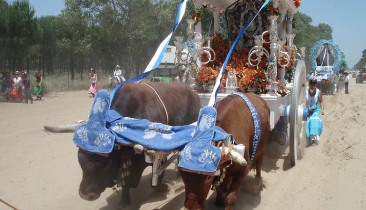 Benacazón – 20 Peregrinación andando al Rocío