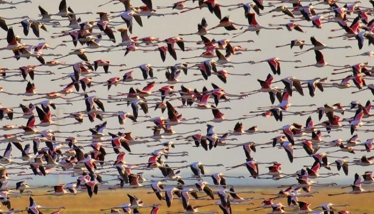 Más de 500 personas velarán por Doñana