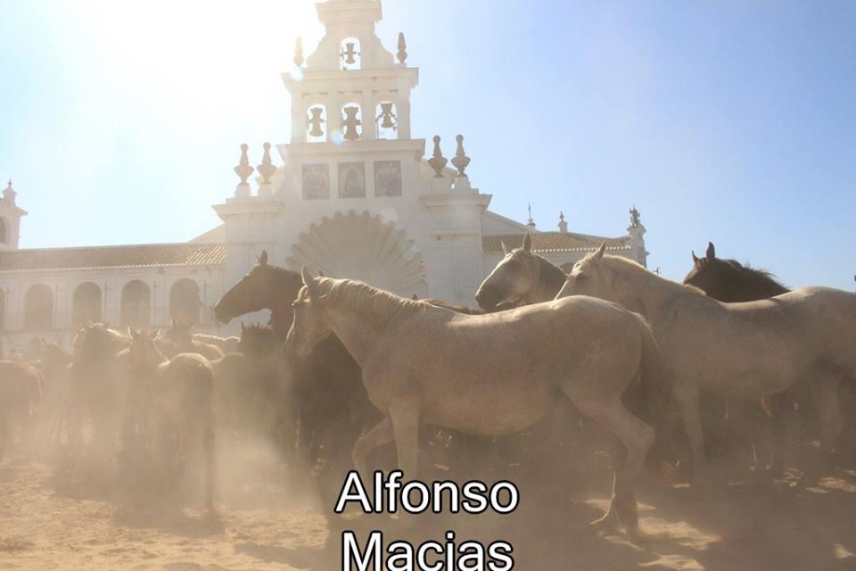 Saca yeguas 2015 a. Macias-22