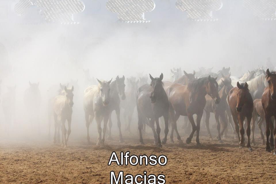 Saca yeguas 2015 a. Macias-28
