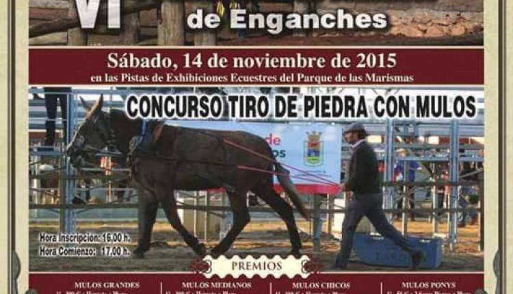 Hermandad de Los Palacios – VI prueba Amater de Enganches.