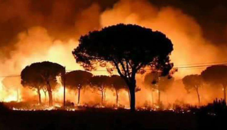 Resultado del incendio en el Parque Doñana, 10.900 hectáreas afectadas – Vídeos del desastre