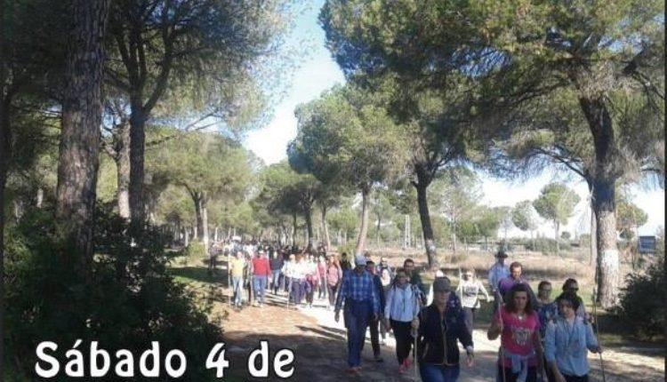 Hermandad de Bollullos par del Condado – Peregrinación al Rocío