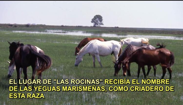 """Documental """"La Saca de Las Yeguas: Tradición Milenaria"""" por Javi el Almonteño"""