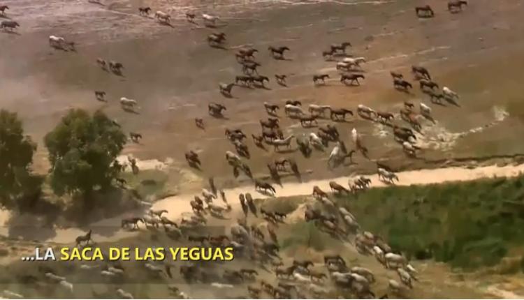 La Saca de Yegüas – Una tradición documentada hace mil años por Javier Coronel